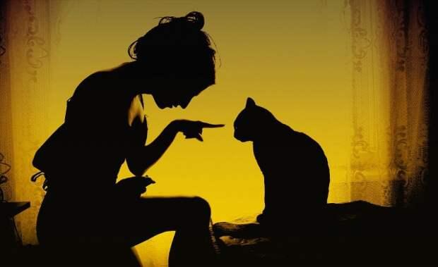 10 признаков кошачьей любви кошки, любовь