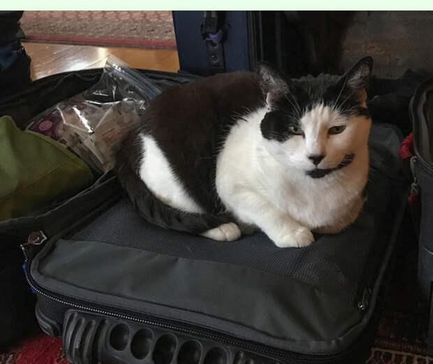 Сам себе пассажир. Домашние животные смогут самостоятельно ездить в поездах РЖД