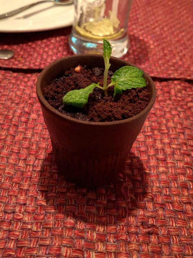 Шоколадный десерт в цветочном горшке.