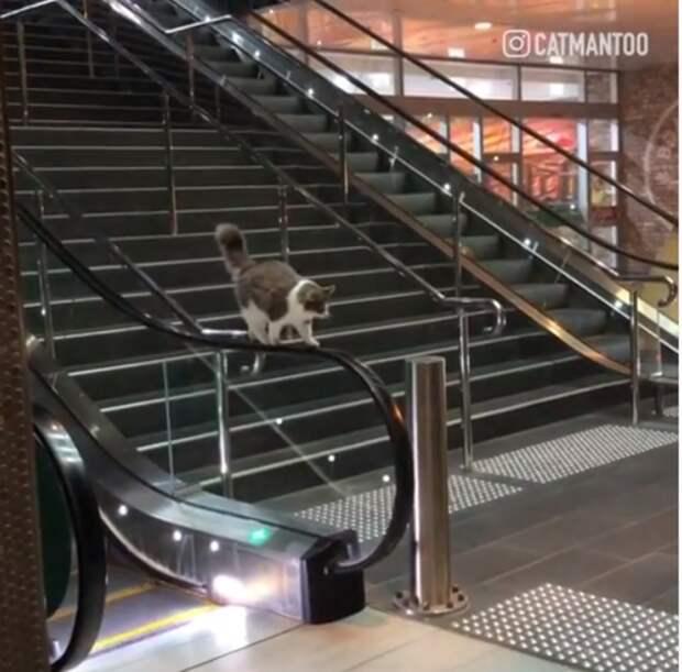 Кошка на перилах эскалатора вызвала много вопросов