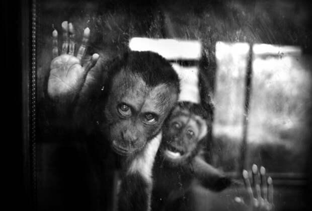 Завораживающие моменты в монохромных фотографиях