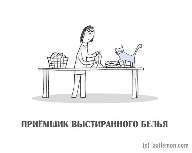 17 очень важных профессий каждого настоящего кота. В картинках