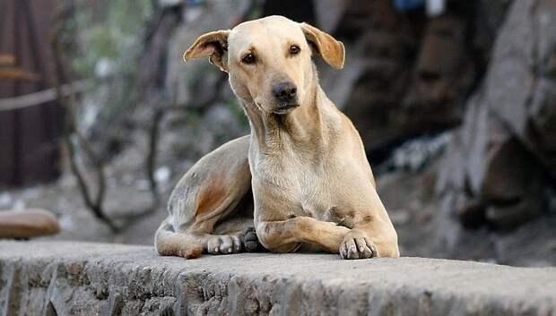Трех безнадзорных собак отловили в поселке МИС по просьбе жительницы