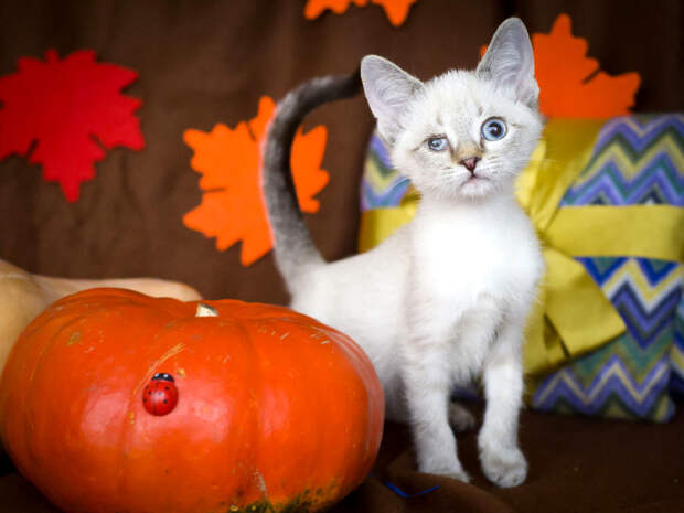 Пятничная кошечка Ясмина: ты можешь ее осчастливить!