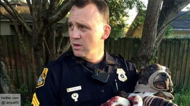 Полицейские США остановили поезд, чтобы спасти собаку