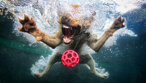 Невероятный позитив: собаки ловят мячик подводой