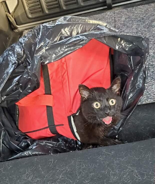 Хаски чудом спасла кошку, которую хозяева оставили погибать на жаре