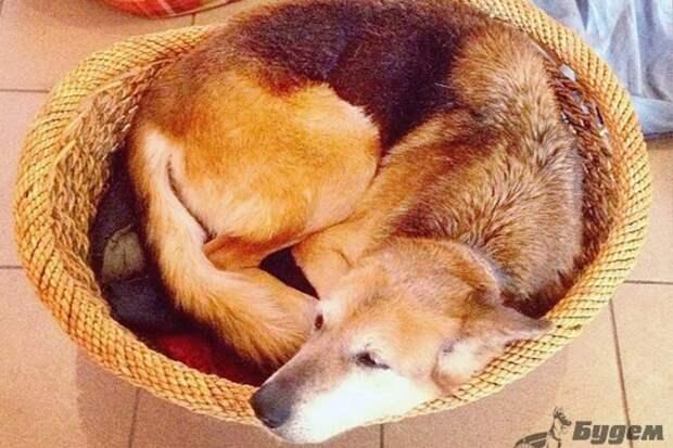 Душещипательная история о безумной воле к жизни безухого пса Келли, больного онкологией