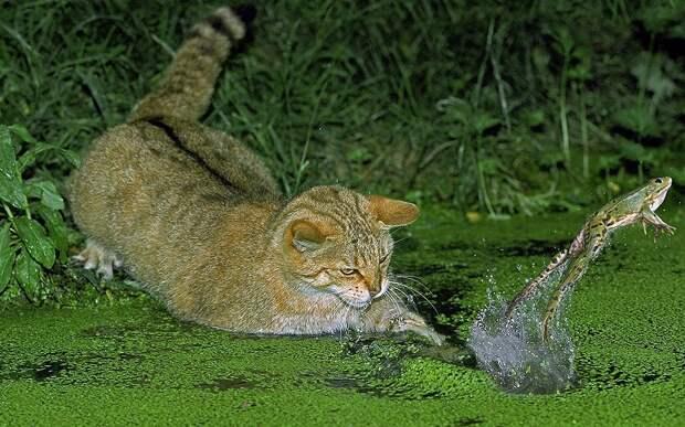 Самые интересные фотографии животных прошедшей недели