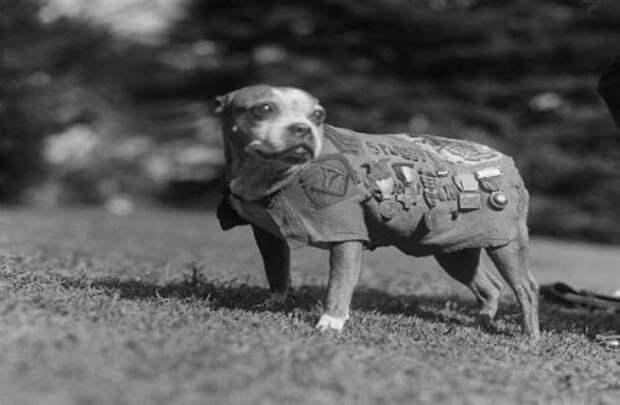 Топ-25: Выдающиеся собаки, сумевшие совершить невозможное