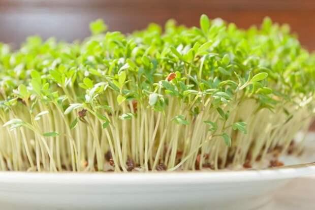 Вырастите кресс-салат к новому году!