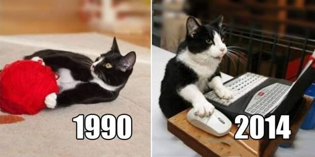 Со временем, некоторые их предпочтения могут поменяться... домашние животные, животные, как люди, коты, прикол, юмор