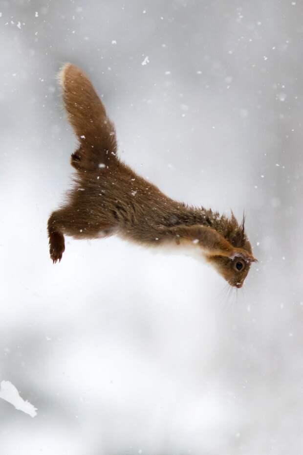 Потрясающие кадры с животными в прыжке
