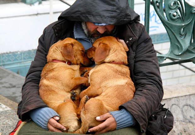 7. Спящие попрошайки  бездомный, любовь, собака