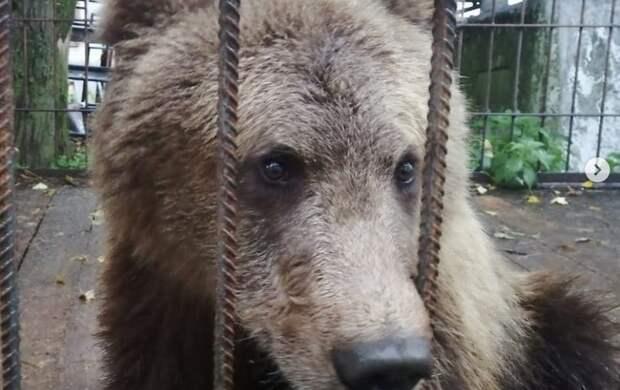 """Волонтеры """"Велеса"""" выкупили медвежонка у частной фермы"""
