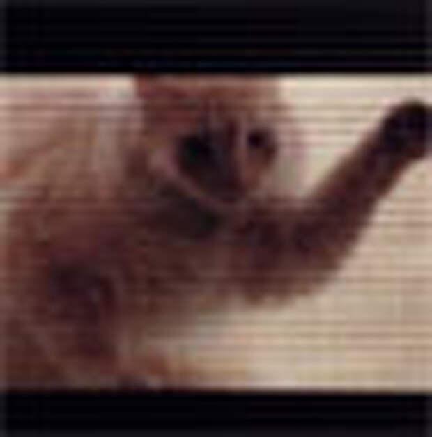 Чтобы кот не попал в микроволновку