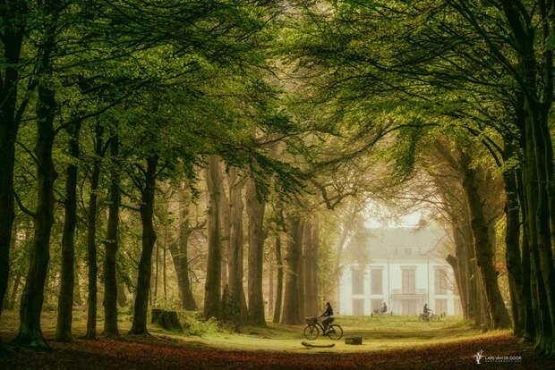 Лесные пейзажи голландского фотографа Ларса ван де Гура