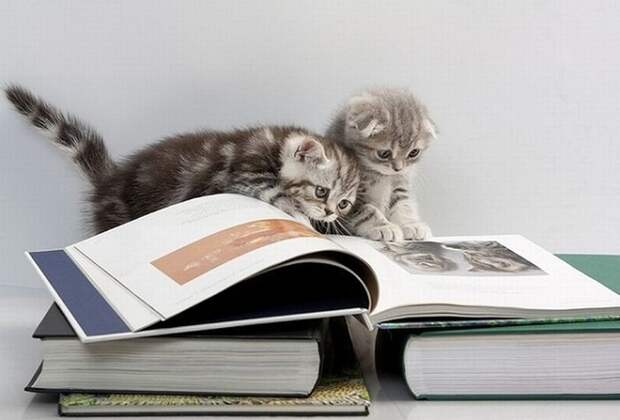 Откуда берутся ученые коты?