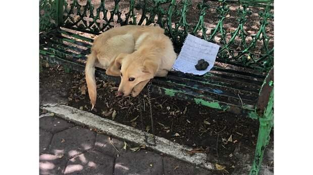 Хозяева бросили в парке щенка с грустной запиской