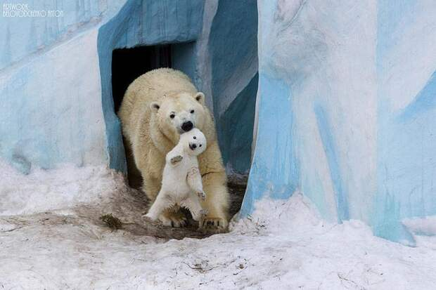И животным не чужды семейные ценности!