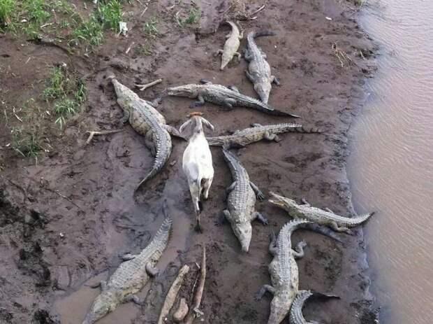 Животные, которым все до фонаря