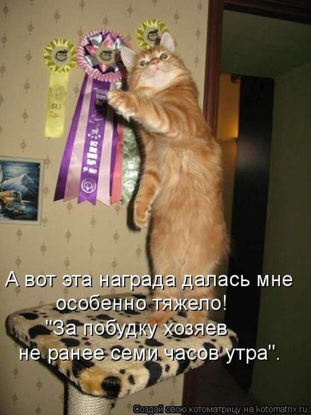 Забавные животные :)