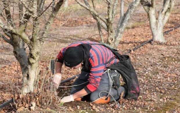 Люди тоже пытаются искать грибы, хотя у собак и свиней это получается гораздо лучше дорого, еда, трюфель