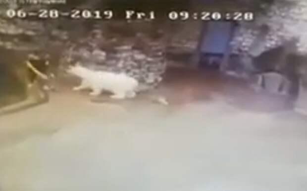 В московском зоопарке белый мишка получил от уборщицы веником за то, что ходил по помытому