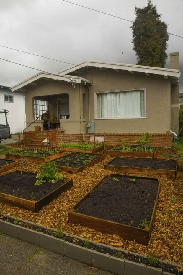 Посмотрите,это очень интересно!Всего за 60 дней этот парень вырастил крутой сад перед домом!