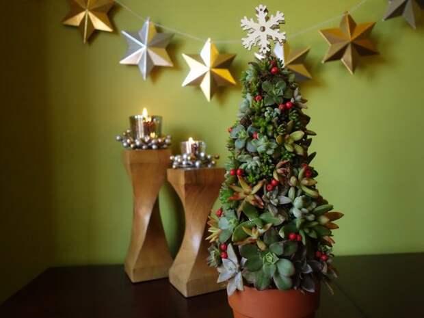 Интересные и необычные варианты новогодних елок из суккулентов