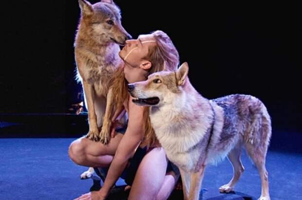 Шведы позволили белорусскому участнику  выступить на «Евровидении» с живым волком