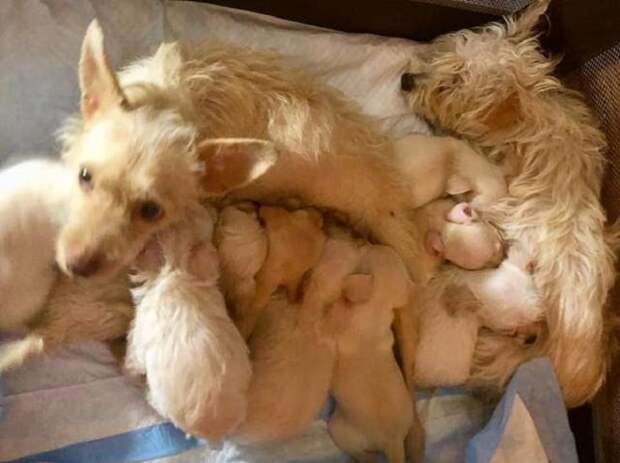 Собачки и щенки