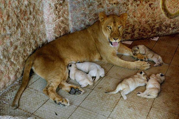 Лучшие фотографии животных за неделю животные, лучшие, фото