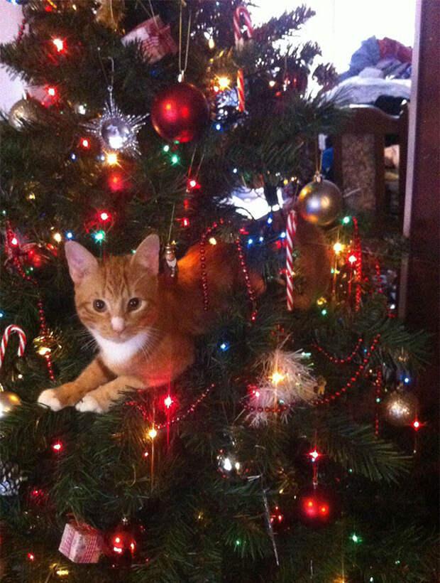 11. Не обращай на меня внимания елка, кошка, подборка