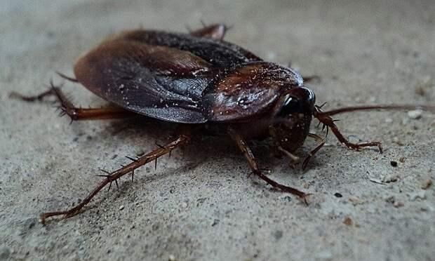 В подъезде на Шумилова поморили тараканов — Жилищник