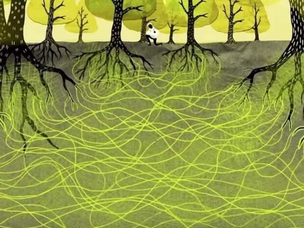 Деревья умеют любить