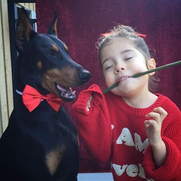 Собак считают одними из самых преданных животных.