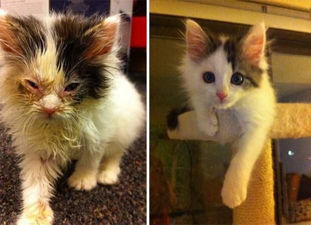 Животные до и после спасения
