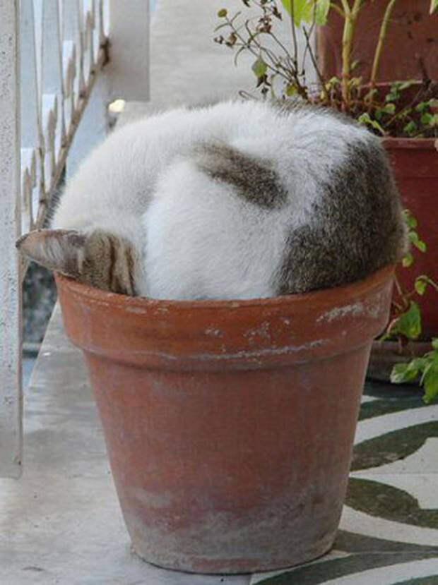 15 котов которые могут спать где угодно