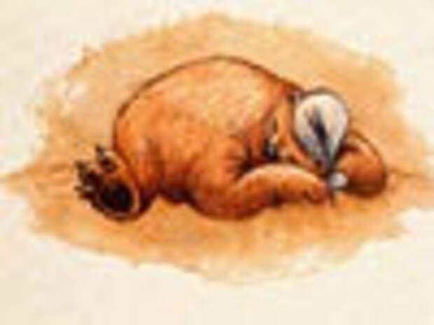 Медведи – балбесы