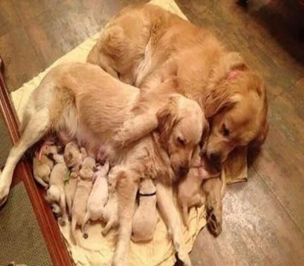 14 милых семейных фотографий животных