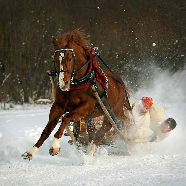 2. Арабские лошади – Кумотерки. Арабская лошадь очень подвижна. Особенно они любят гонки на выносл
