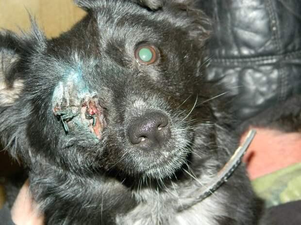 Собаке пришлось пережить ВЫСТРЕЛ практически в упор в голову