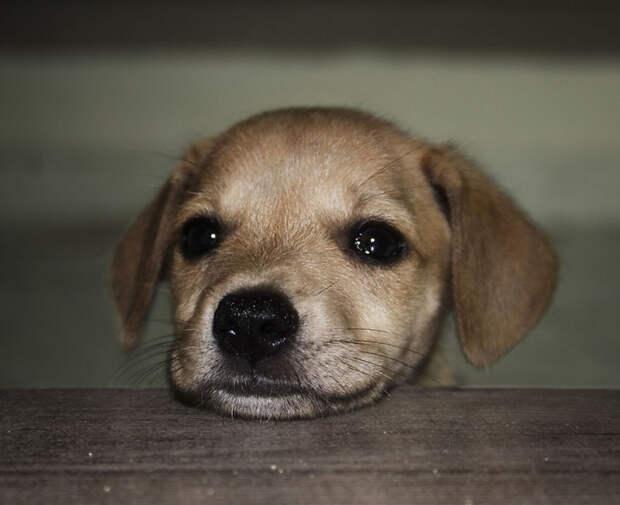 Первое фото Симбы вскоре после того, как она была спасена от смерти на улицах Дар-эс-Салама, Танзания, в 2013 году питомцы, расстояние, собака, эксперимент