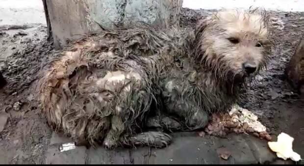 Лохматый пес неделю пролежал неподвижно в холодной луже