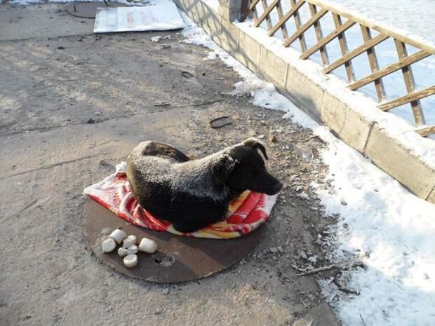 """Павлодарский """"Хатико"""" не принимает помощи и по-прежнему ждёт своего хозяина"""