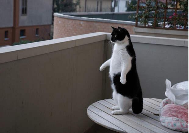 17.  кот, поза