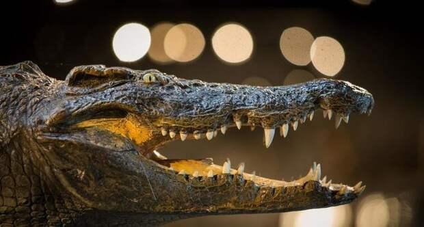 Почему динозавры вымерли, а крокодилы остались жить и процветают до сих пор