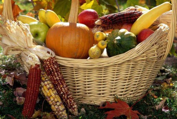 В огородных делах мелочей не бывает: осенние советы