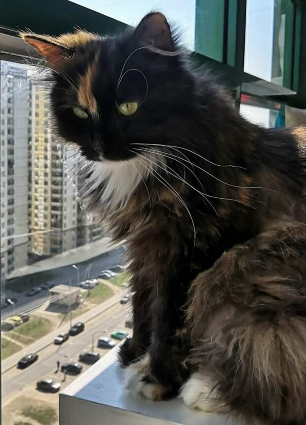 Кому такую умницу, красавицу? Преданнее кошки вы не найдёте во всём мире!